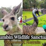 Roo's Top Picks: Currumbin Wildlife Sanctuary